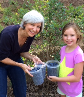 gathering blueberries